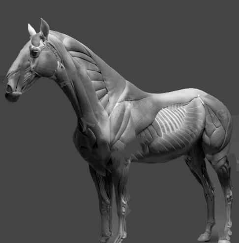 骏马3D模型