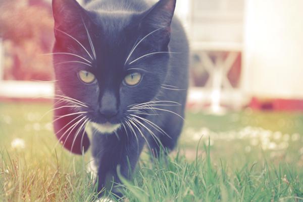 Photoshop给猫咪照片调出梦幻效果