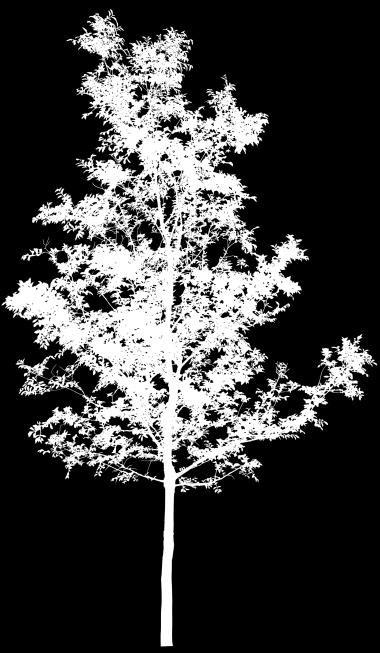 3dmax如何制作树阴效果