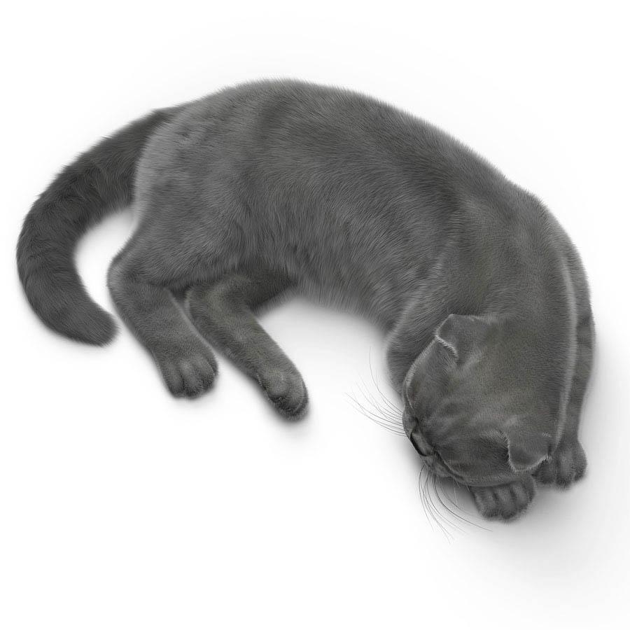 逼真的猫模型
