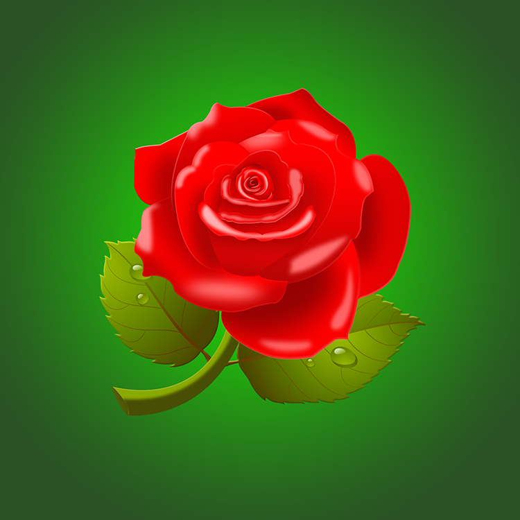 玫瑰花的PSD素材