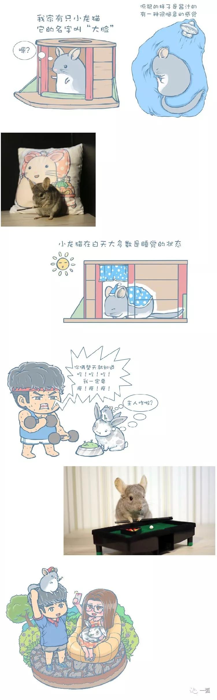 韩子获的龙猫作品与龙猫原型